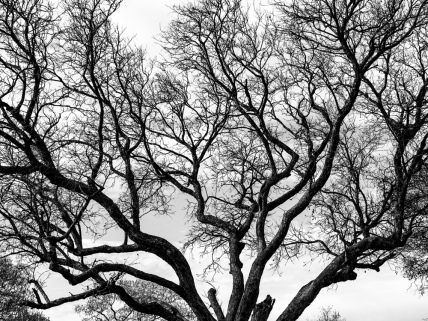 bwtree2